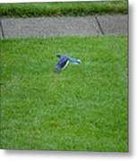 Blue Flight Metal Print