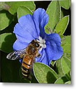 Blue Flower Bumblebee Metal Print