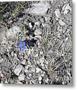 Blue Flower In Desert Metal Print