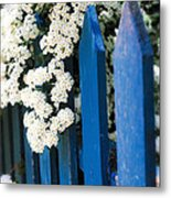 Blue Garden Fence With White Flowers Metal Print