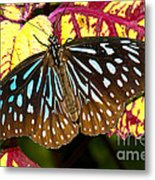 Blue Glassy Tiger Butterfly Metal Print