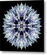 Blue Globe Thistle Flower Mandala Metal Print