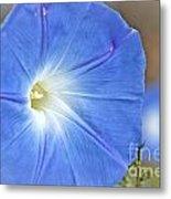 Blue Glories Metal Print