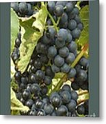Blue Grapes Metal Print by Patricia Overmoyer