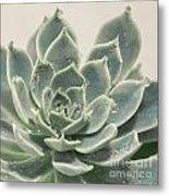 Blue Green Succulent Metal Print