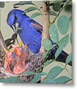 Blue Grosbeak Guiraca Caerulea Metal Print