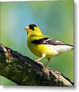 Blue Heart Goldfinch Metal Print