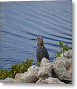 Blue Heron 1 Metal Print