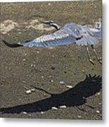 Blue Heron And Shadow Metal Print