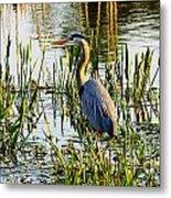 Blue Heron Backside Metal Print