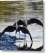 Great Blue Heron Ballet Metal Print