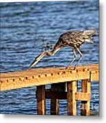 Blue Heron Dragonfly Lunch Metal Print