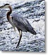 Blue Heron Fishing V3 Metal Print