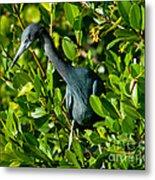 Blue Heron In Mangroves Metal Print