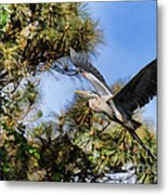 Blue Heron In The Trees Oil Metal Print