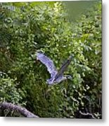 Blue Heron Journey I Metal Print