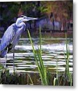 Blue Heron On The Bay Metal Print