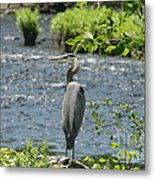 Blue Heron River Fishing  Metal Print