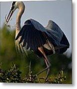 Blue Heron Wing Tips Metal Print