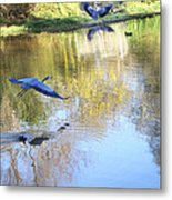 Blue Herons On Golden Pond Metal Print