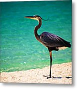 Blue Herring Metal Print by Christopher Lugenbeal