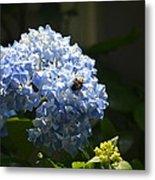 Blue Hydrangea With Bumblebee Metal Print