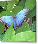 Blue In The Leaves Metal Print