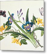 Blue Iris And Insects Metal Print