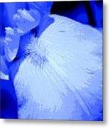 Blue Iris Metal Print