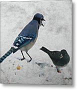 Blue Jay And Junco Metal Print