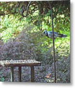 Blue Jay At Lunch Metal Print