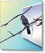 Blue Jay Branch Metal Print