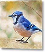 Blue Jay - Digtial Paint Metal Print
