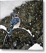Blue Jay In Snow Storm Metal Print
