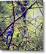 Blue Jay - Paint Effect Metal Print
