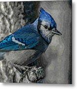 Blue Jay Painterly Metal Print
