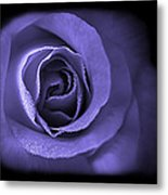 Blue Lavender Violet Roses Triptych Metal Print