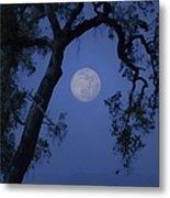 Blue Moon Horse And Oak Tree Metal Print