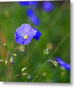 Blue Morning Flowers Metal Print