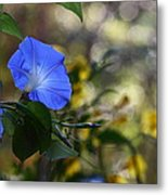 Blue Morning Glories Metal Print