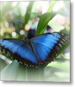 Blue Morpho Butterfly Dsc00575 Metal Print