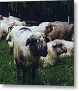 Blue Mountain Sheep Metal Print
