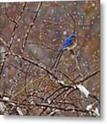 Blue Norther Metal Print