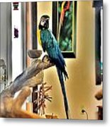 On The Perch Metal Print