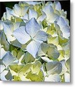 Blue Pastel Floral Art Prints Hydrangea Flowers Metal Print