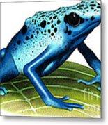 Blue Poison Dart Frog Metal Print