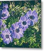Blue Poppies Blooms Metal Print