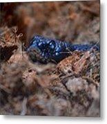 Blue Racer Snake Metal Print