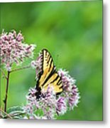 Blue Ridge Butterfly Metal Print