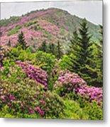Blue Ridge Mountain Rhododendron - Roan Mountain Bloom Extravaganza Metal Print